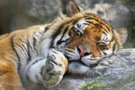 Wildlife Heritage Foundation - A Big Cat Encounter and Tour with Afternoon Tea - Save 34%