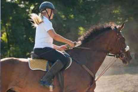 The Cabin Equestrian Centre - One Hour Group Horse Riding Lesson for One - Save 65%