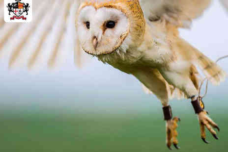 Gyrs International - Owl Experience for One  - Save 51%