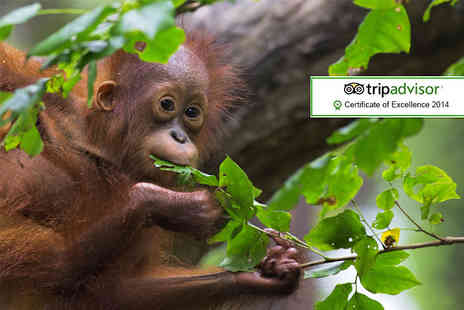 The Great Projects - Two week all inclusive Borneo orangutan, tribe & rainforest experience - Save 27%