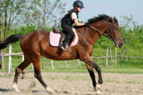 Moorwood Equine - Thirty Minute Horse Riding Group Session - Save 45%
