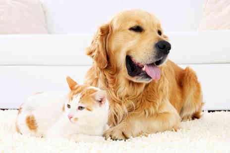 Holly and Hugo - Accredited Online Animal Psychology Course - Save 83%