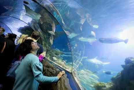 Merlin Events - One ticket to SEALIFE After Dark on 27th March 2015, including Prosecco on arrival at London Aquarium  - Save 44%