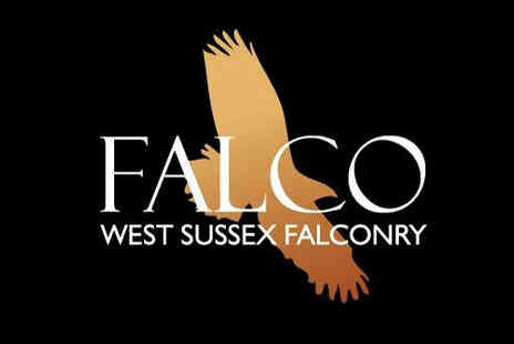 Falco - An unforgettable falconry experience for one - Save 71%