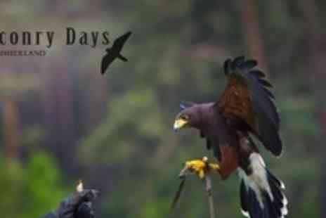 Falconry Days - Four Hour Birds of Prey Experience - Save 61%