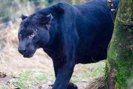 Exmoor Zoological Park - Big Cat Experience and Zoo Entry  - Save 51%