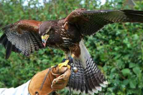 Battlefield Falconry Centre - Two hour birds of prey experience - Save 68%