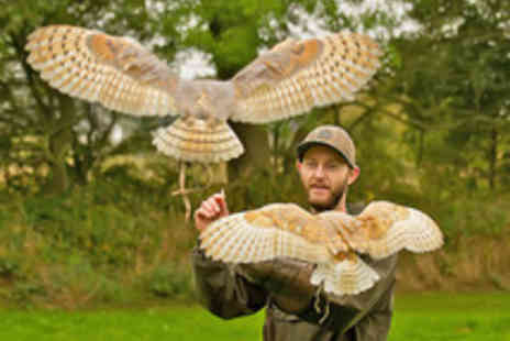 World of Wings - Entry to World of Wings Birds of Prey Centre for up to Six  - Save 46%