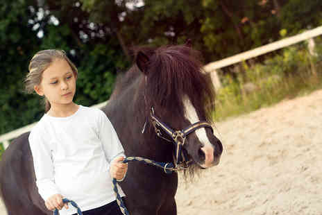 Gifts and Skills - Own a pony for a day experience  - Save 47%