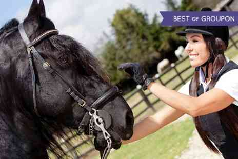 Tannoch Stables - 90 Minute Indoor Horse Riding Lesson  - Save 60%