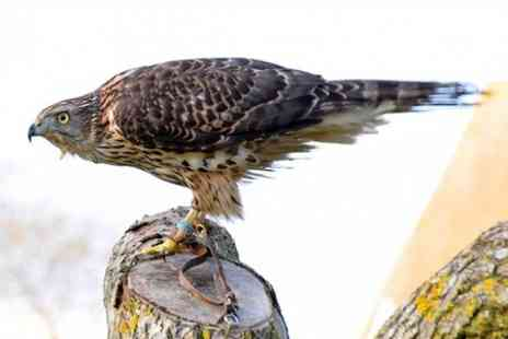 Millets Farm Falconry Centre - Advanced Entry to Millets Farm Falconry For One - Save 54%