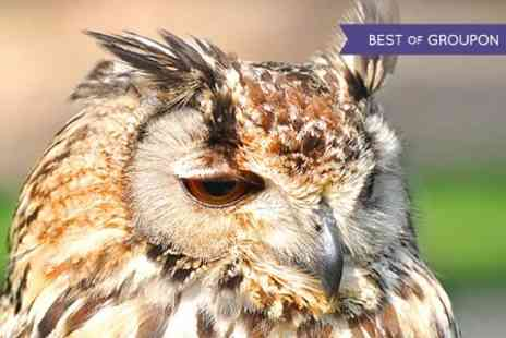 West Sussex Falconry - Half Day Falconry Experience For Two - Save 71%