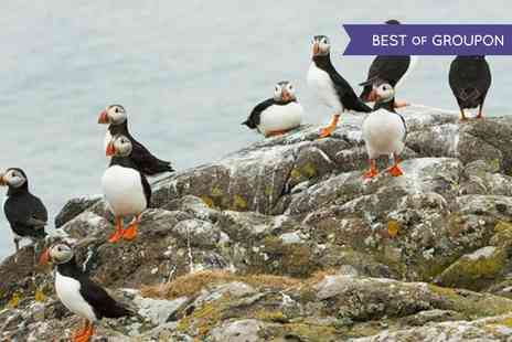 Anglesey Boat Trips - Seal and Puffin Watching Tour - Save 53%