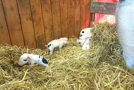 Gorgie City Farm - Family Entry Plus Scones and Drinks - Save 50%