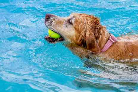 Fit Paws Hydrotherapy - Dog Fitness Swim  - Save 55%