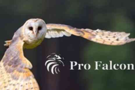 Pro Falconer - Owl Experience For Two Adults and Two Children - Save 76%