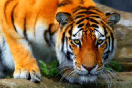 Paradise Wildlife Park - Big Cat Animal Experience  - Save 45%