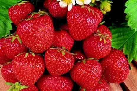 Suttons Seeds - Summer Fruits Plant Collection With Free Delivery  - Save 50%