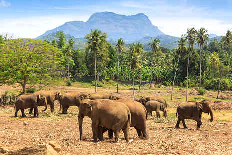 On The Go Tours - Eight day Sri Lanka tour including transfers and 3 or 4 star accommodation  - Save 33%