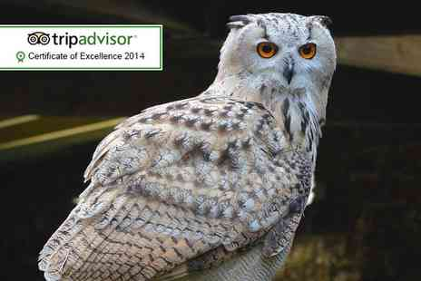 Scottish Owl Centre - Entry to the Scottish Owl Centre for 2 - Save 40%