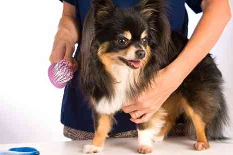 Hair of the Dog - Dog Grooming Session  - Save 0%