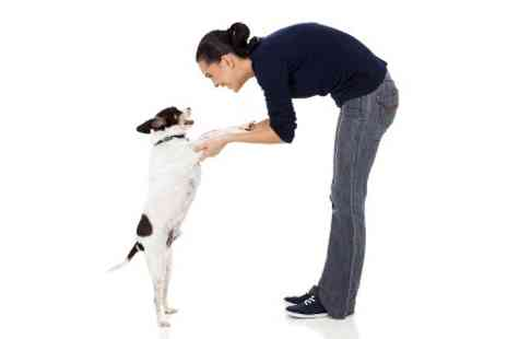 Pet Addict - Online Dog Training Course - Save 95%