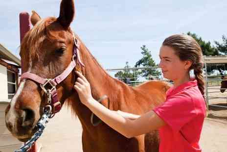 Racehorse Rescue Centre - Equestrian Experience - Save 0%