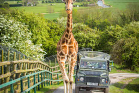 Port Lympne Reserve - Luxury Safari Break at Port Lympne Reserve's Livingstone Lodge with Two Safaris, Four Course Feast and Park Entrance - Save 40%