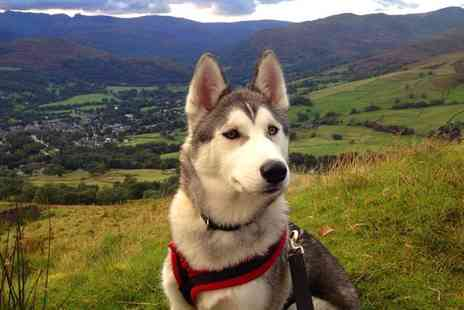 Horse and Husky - Two nights Lake District break for 2 including half day hike with huskies, self catering apartment and daily breakfast  - Save 50%