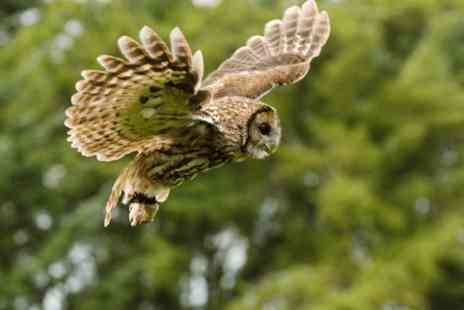 North Somerset Bird of Prey Centre - Two  hour owl experience for two - Save 0%