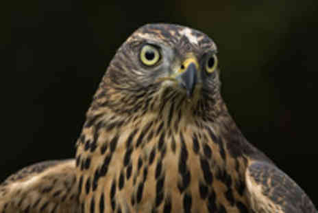 HawksFlight Falconry - Three Hour Birds of Prey Experience - Save 62%