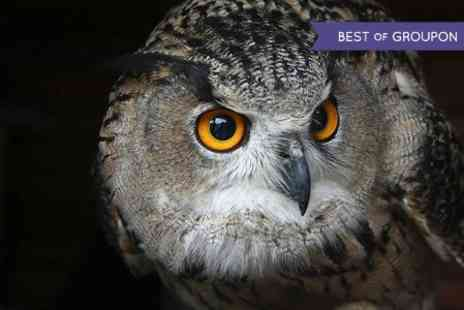 Walworth Castle Birds of Prey - Birds of Prey Tour and Falconry Display For Two - Save 0%