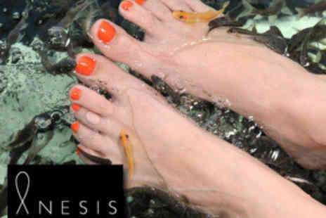 Anesis - 30 min Fish Pedicure at Luxury Salon Anesis  - Save 60%