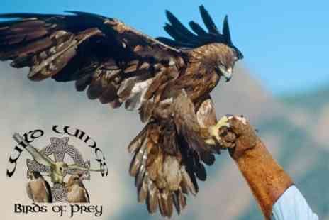 The Wild Wings Birds of Prey Centre - One Hour Falconry Experience with Hawks, Owls, Falcons,Eagles and Black Vulture - Save 63%