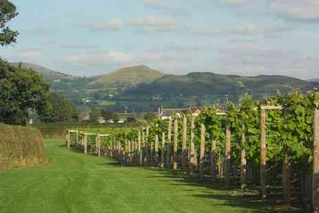 Kerry Vale Vineyard - Vineyard Tour and Wine Tasting Plus Tea and Cake - Save 0%