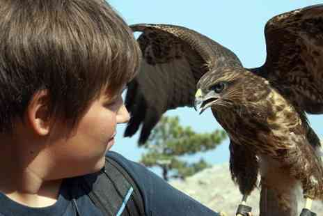 Fens Falconry - Falconry Experience With Lunch For One - Save 56%