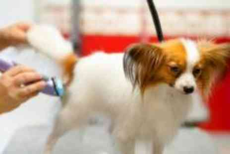 Smart Dog Salon - Dog grooming - Save 60%