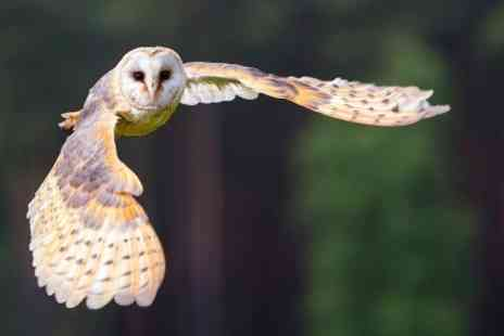 Simon Tebbutt Falconry - One Hour Photography Experience - Save 0%