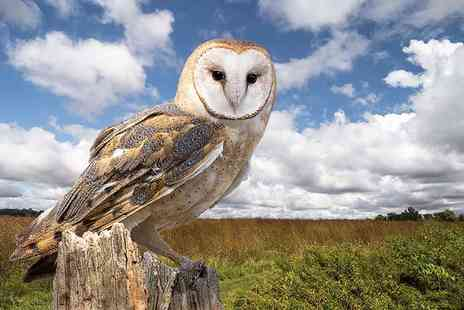 Birds of Prey Centre - Half day owl experience for one including a hot drink and slice of cake - Save 77%