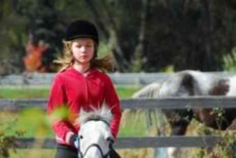 Continental Sport Horses - Two private or group horse riding lessons - Save 60%
