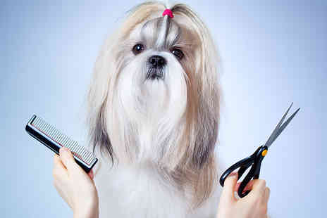 New City Learning - Online Dog Grooming Course - Save 85%