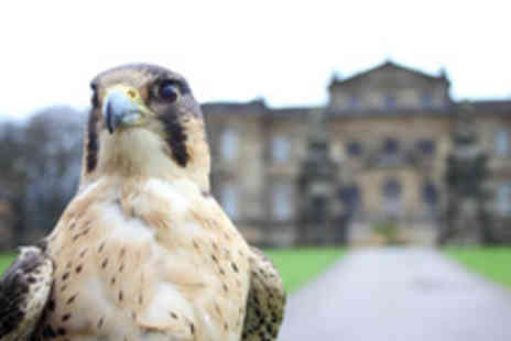 International Centre for Birds of Prey  - Entry to The International Centre for Birds of Prey with a Drink - Save 49%