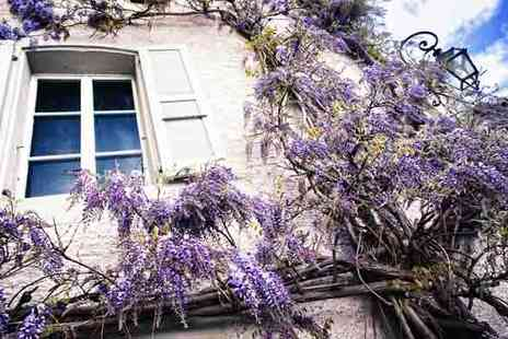 bristol tropical centre - Wisteria Climbing Plant - Save 54%