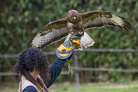 York Bird Of Prey Centre - Hawk walk experience  - Save 60%