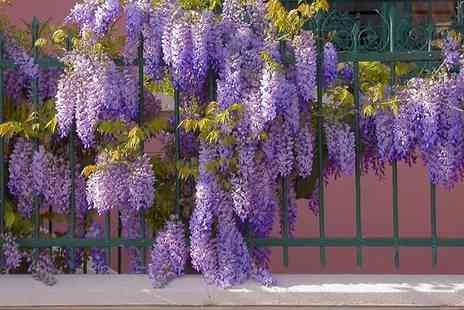 Bristol Tropical Centre - Wisteria Climbing Plant - Save 58%