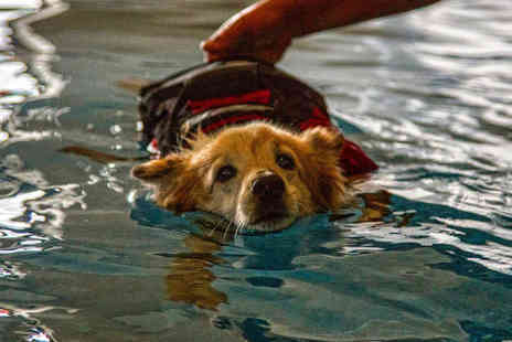 Fit Paws Hydrotherapy - Canine hydrotherapy fitness session   - Save 64%