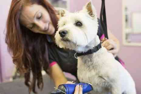 The Doggy Den - Dog Grooming - Save 50%