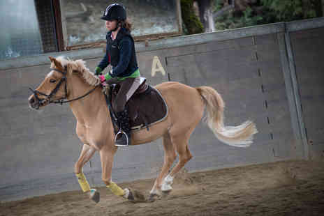Cae Hic Livery  - One hour group riding lesson for One    - Save 40%