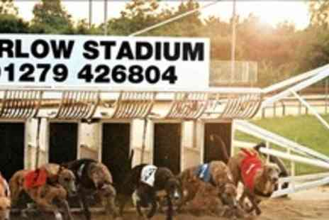 Harlow Greyhound Stadium - Greyhound Racing Entry For Four With a Meal and Drink Each - Save 70%