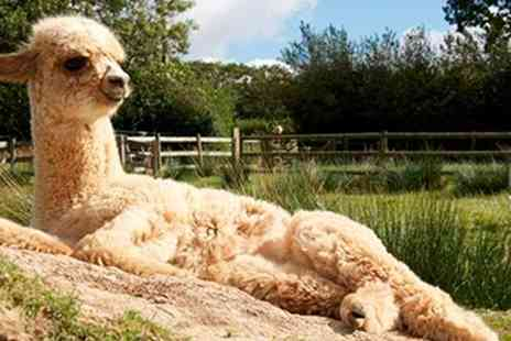 The Alpaca Park - Entry to The Alpaca Park For Two Adults  - Save 50%